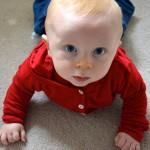 Merino Baby Australian Wool