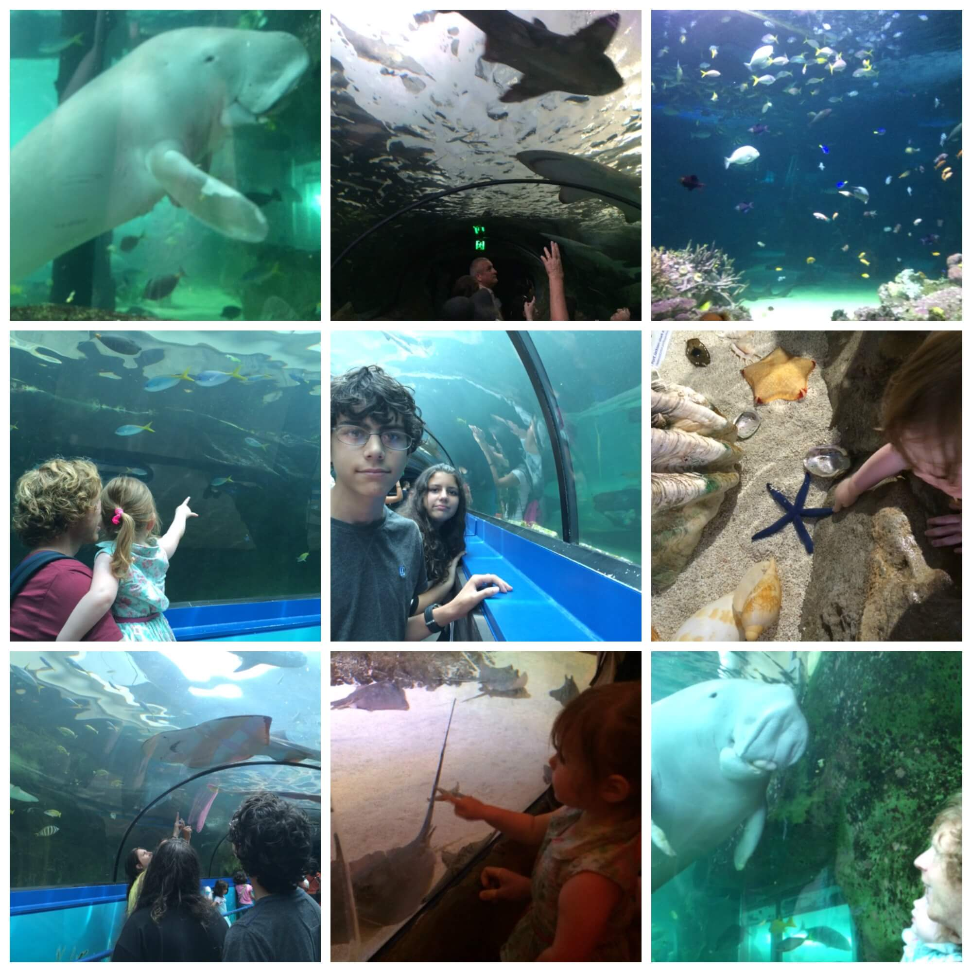 SEA LIFE Sydney Aquarium Novotel Darling Harbour Staycation